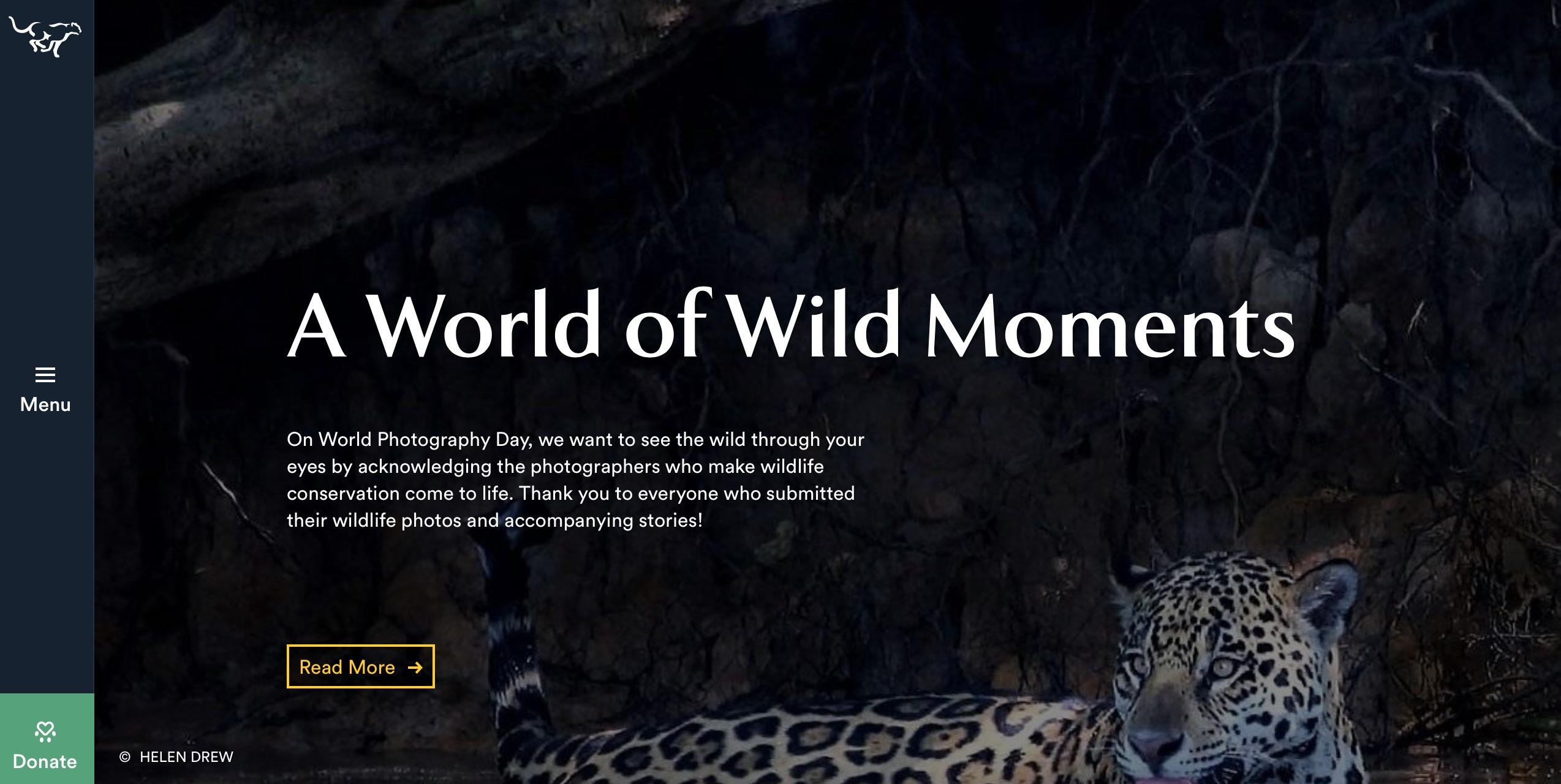 digital marketing call-to-action | Panthera | Agency Vista