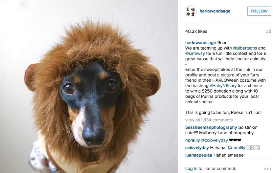 Halloween Social Media Campaign | Harlow and Sage | Albertsons x Safeway | Agency Vista